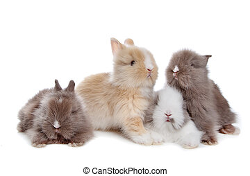 vier, Kaninchen, junger, Reihe