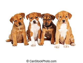 vier, reizend, hundebabys, zusammen