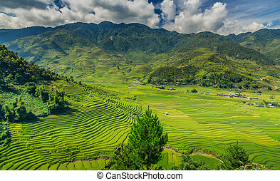 vietnam - beautiful pictures of nature in Vietnam