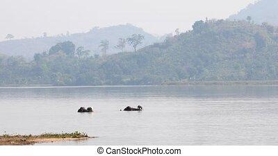 Vietnam, Daklak province, 21 March 2019 year the elephants...