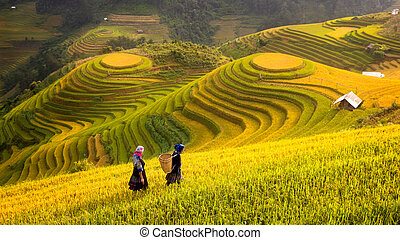 Rice fields on terraced of Mu Cang Chai, Yen Bai, Rice fields prepare the harvest at Northwest Vietnam. Vietnam landscapes.