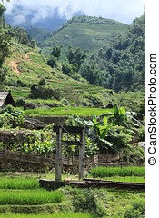 Vietnam Ricefields