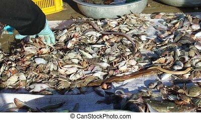 Vietnamese fishermen sorts catch seafood - Vietnamese woman...