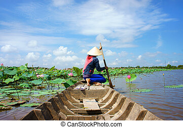Vietnamese village, row boat, lotus flower, lotus pond - ...