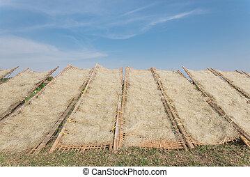 vietnamita, fila, hanoi, sol, hacia arriba, cercas, exterior, vietnam, vista, secado, arroz, bambú, fideos