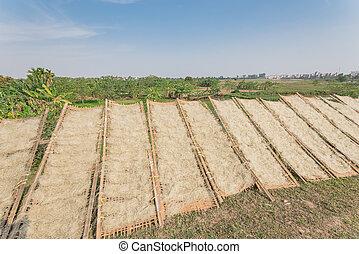 vietnamita, granja, orgánico, cercas, secado, luz del sol, plátano, arroz, bambú, fideos