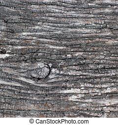 vieux, écorce, arbre