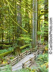 vieux, île, bosquet, rainforest, croissance, vancouver,...