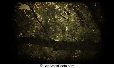 vieux, autour de, arbre chêne, sous, trunk.