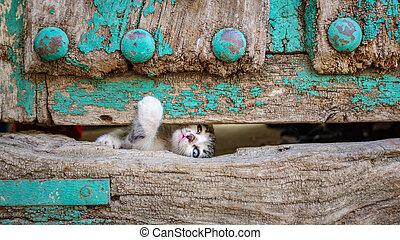 vieux, bois, chaton, par, évasion, petit, porte, trou, essayer
