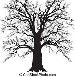 vieux, branché, arbre