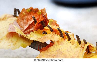 vieux, feuilles, automne, râteau