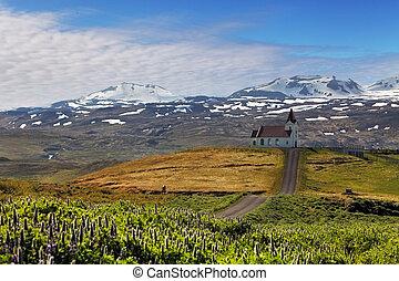vieux, petit, église bois, dans, hellnar, islande