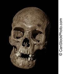 vieux, réduction, crâne