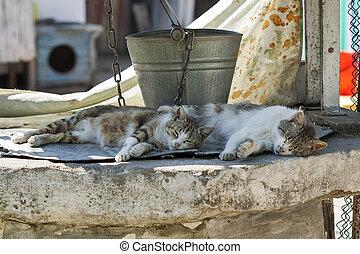 vieux, seau, puits, deux, rue, chats