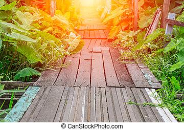 vieux, sentier, bois, pont, dans, profond, forêt, croisement, eau, à, luisant allumer, fin, bois, promenade, manière
