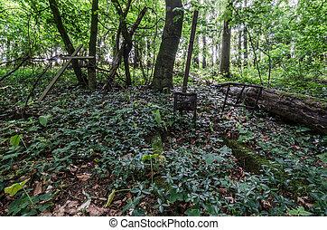 vieux, tombeaux, dans, forêt