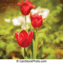 vieux, tulipes, papier, fond, textured, rouges