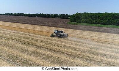 vieux, wheat., aérien, reaps, moissonneuse