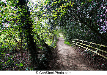 View along a path in the Chilterns, England - View along a...