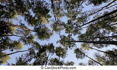 View at sky through trees at wide angle