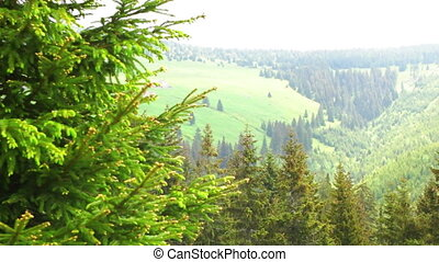 View at the Forest in the Krkonose National Park