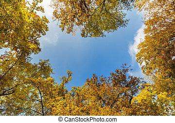 View at the sky through the trees in forest in autumn