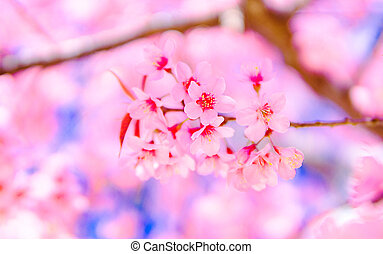 Flower beautiful Wild Himalayan Cherry Blossom