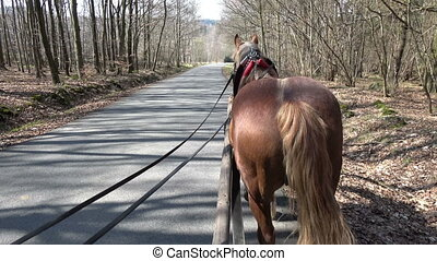 View from a carriage of a horse during a ride in the forest...