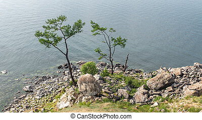 view from a cliff on two trees near the water
