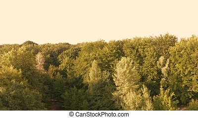 View from a dron rising in a forest. Trees landscape with ...