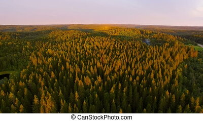 view from a height of forest in sunset time - the setting...
