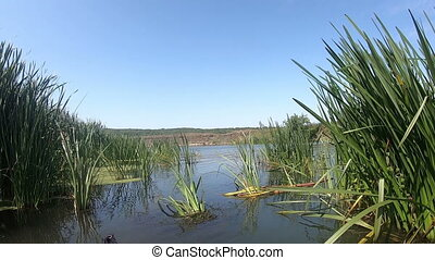 View from a kayak floating in the water with reeds. Slow ...