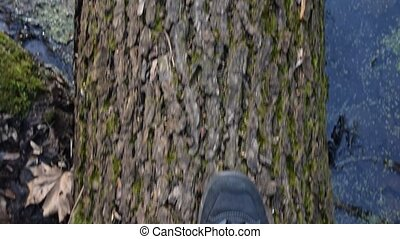 View from above on feet of a person walking on fallen tree trunk