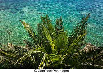 view from above on palm growing at sea with turquoise water...