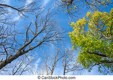 View from below in the treetops of various deciduous trees in autumn, some are already bald, one tree is still green. Taken on a sunny day with blue sky in Germany.