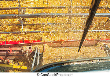 view from cabin of combine harvester in time harvest
