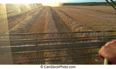 View from cockpit of harvester. Combine moves through the...