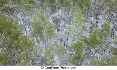 View from height to the winter forest covered with snow