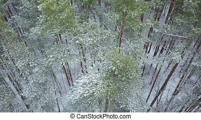 View from height to the winter forest covered with snow -...