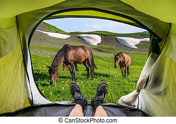 View from inside a tent on the horses and mountains