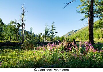 View from Mongolian wilderness area - flowering meadow and ...