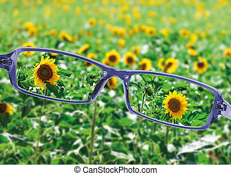 View from reading eyeglasses on beautiful nature view,...