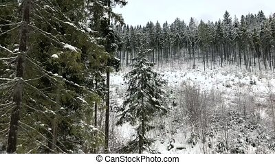 View from the air of winter forest during a snowfall in mountains