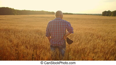 View from the back: A gray-haired elderly male farmer in a shirt looks at a sunset field of wheat after a day's work. Tractor driver takes off his cap at sunset looking at the field of cereal