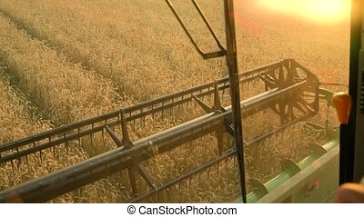 View from the cockpit of combine harvester gathers the wheat at sunset. Harvesting grain field, crop season