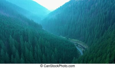 View from the height of mountains covered with coniferous forest and morning fog