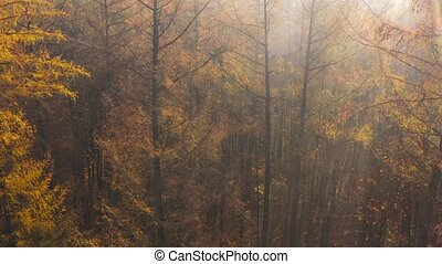 View from the height of the autumn forest. Sun's rays break through the fog