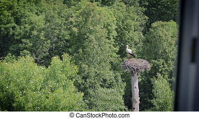 View from the hotel window on the white stork standing in the nest