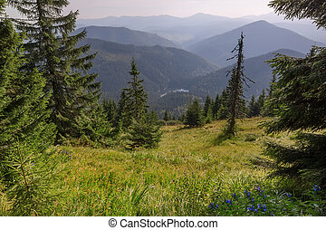 View from the mountain lake Synevir in Carpathian Mountains. In Ukraine.